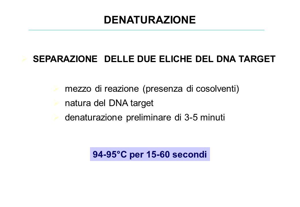 DENATURAZIONE SEPARAZIONE DELLE DUE ELICHE DEL DNA TARGET 94-95°C per 15-60 secondi mezzo di reazione (presenza di cosolventi) natura del DNA target d