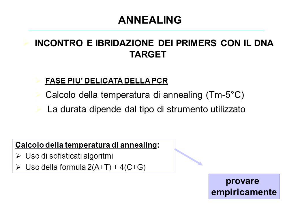 ANNEALING FASE PIU DELICATA DELLA PCR Calcolo della temperatura di annealing (Tm-5°C) La durata dipende dal tipo di strumento utilizzato Calcolo della
