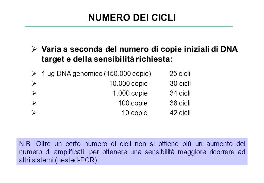 Varia a seconda del numero di copie iniziali di DNA target e della sensibilità richiesta: 1 ug DNA genomico (150.000 copie) 25 cicli 10.000 copie 30 c