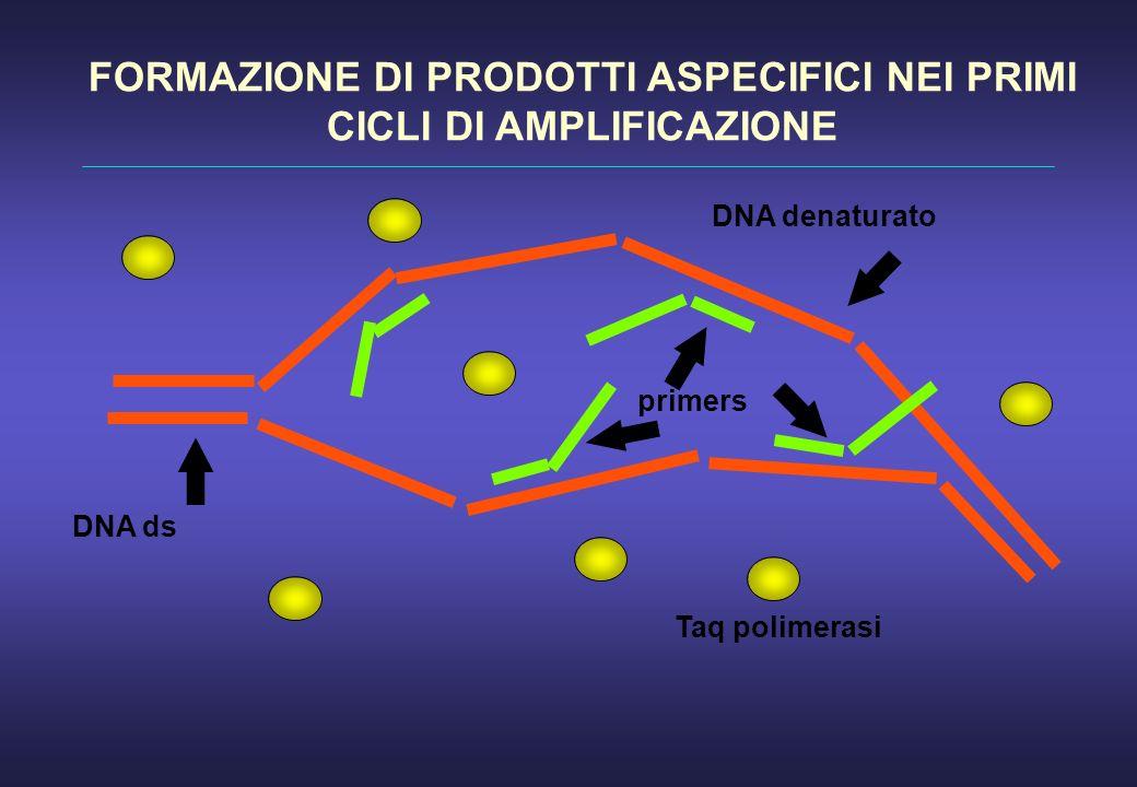 DNA ds DNA denaturato primers Taq polimerasi FORMAZIONE DI PRODOTTI ASPECIFICI NEI PRIMI CICLI DI AMPLIFICAZIONE