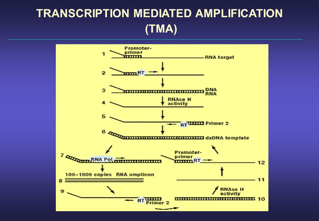 TRANSCRIPTION MEDIATED AMPLIFICATION (TMA)