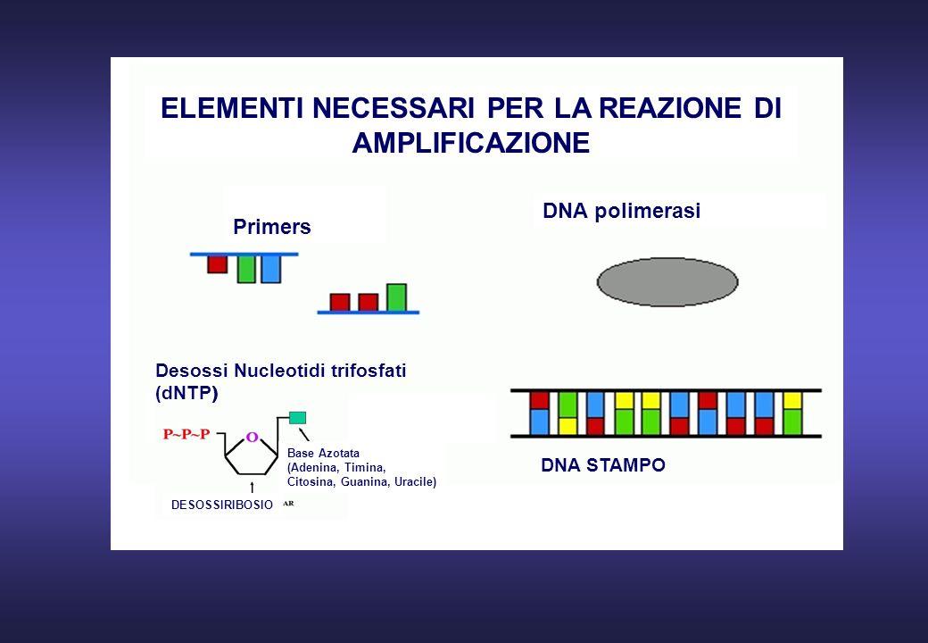 Primers DNA polimerasi ELEMENTI NECESSARI PER LA REAZIONE DI AMPLIFICAZIONE DNA STAMPO DESOSSIRIBOSIO Base Azotata (Adenina, Timina, Citosina, Guanina