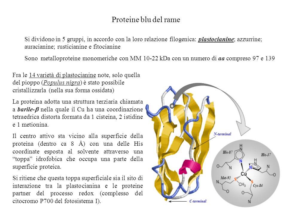 Proteine blu del rame Si dividono in 5 gruppi, in accordo con la loro relazione filogenica: plastocianine; azzurrine; auracianine; rusticianine e fito