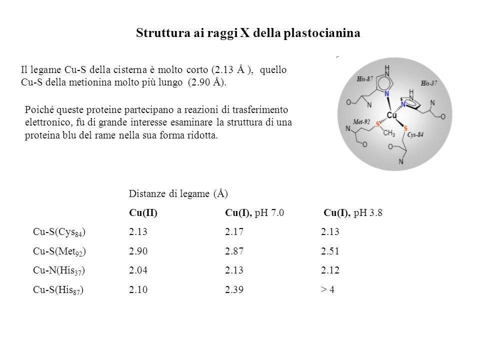 Struttura ai raggi X della plastocianina Il legame Cu-S della cisterna è molto corto (2.13 Å ), quello Cu-S della metionina molto più lungo (2.90 Å).