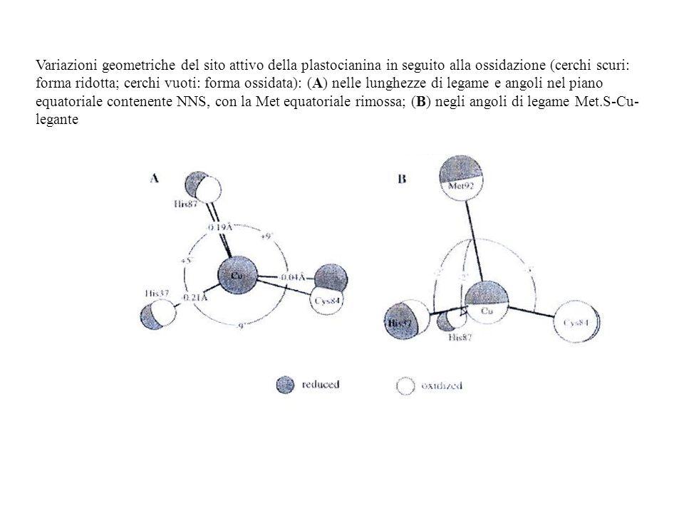 Variazioni geometriche del sito attivo della plastocianina in seguito alla ossidazione (cerchi scuri: forma ridotta; cerchi vuoti: forma ossidata): (A