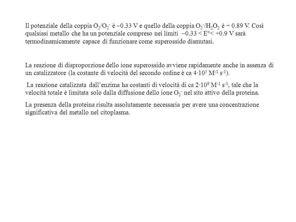Il potenziale della coppia O 2 /O 2 - è –0.33 V e quello della coppia O 2 - /H 2 O 2 è + 0.89 V. Così qualsiasi metallo che ha un potenziale compreso
