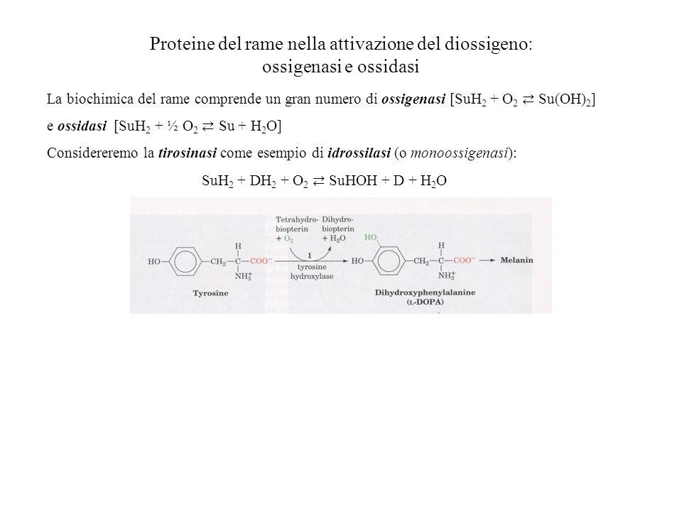 Proteine del rame nella attivazione del diossigeno: ossigenasi e ossidasi La biochimica del rame comprende un gran numero di ossigenasi [SuH 2 + O 2 S