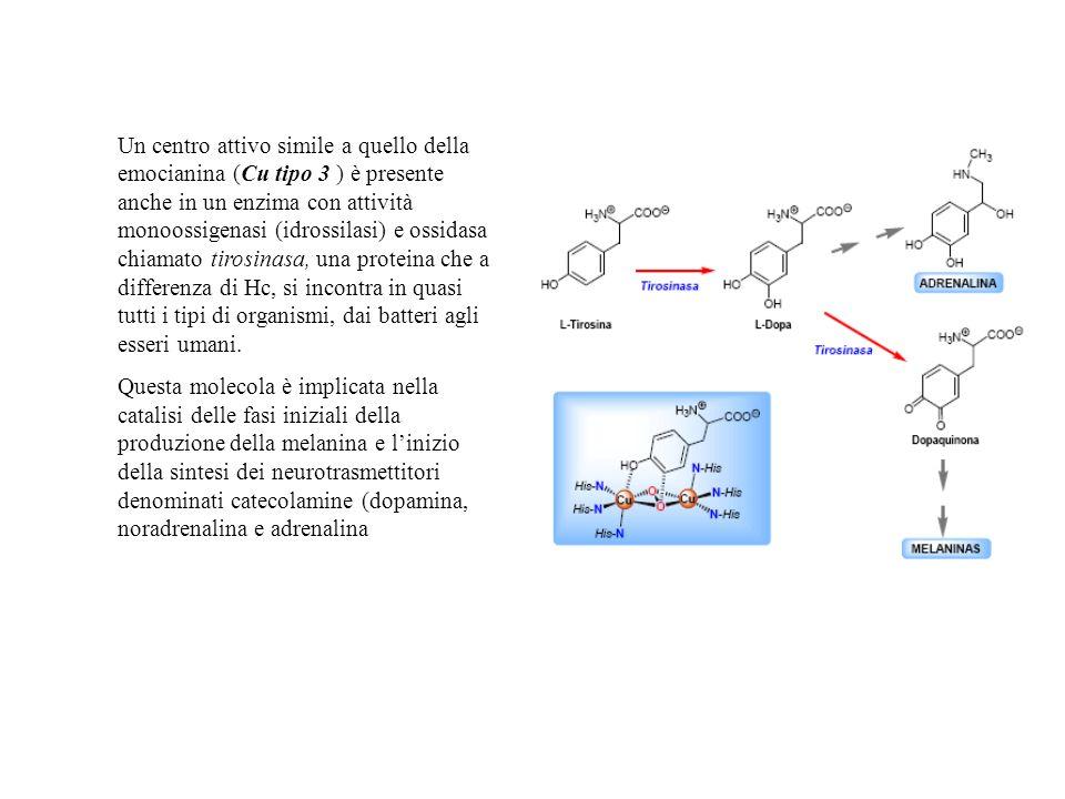 Un centro attivo simile a quello della emocianina (Cu tipo 3 ) è presente anche in un enzima con attività monoossigenasi (idrossilasi) e ossidasa chia