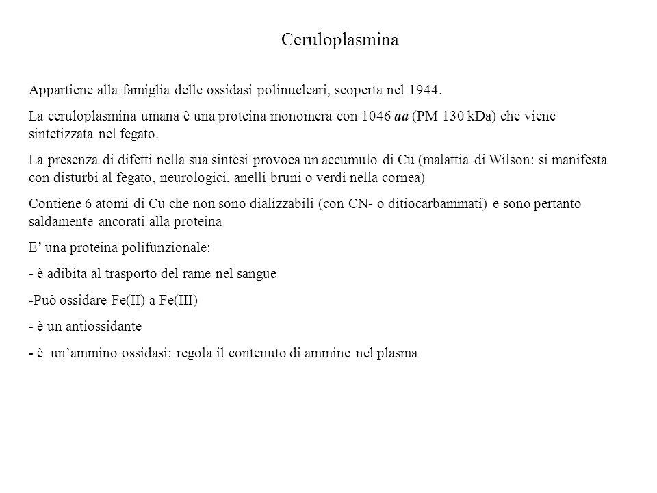 Ceruloplasmina Appartiene alla famiglia delle ossidasi polinucleari, scoperta nel 1944. La ceruloplasmina umana è una proteina monomera con 1046 aa (P