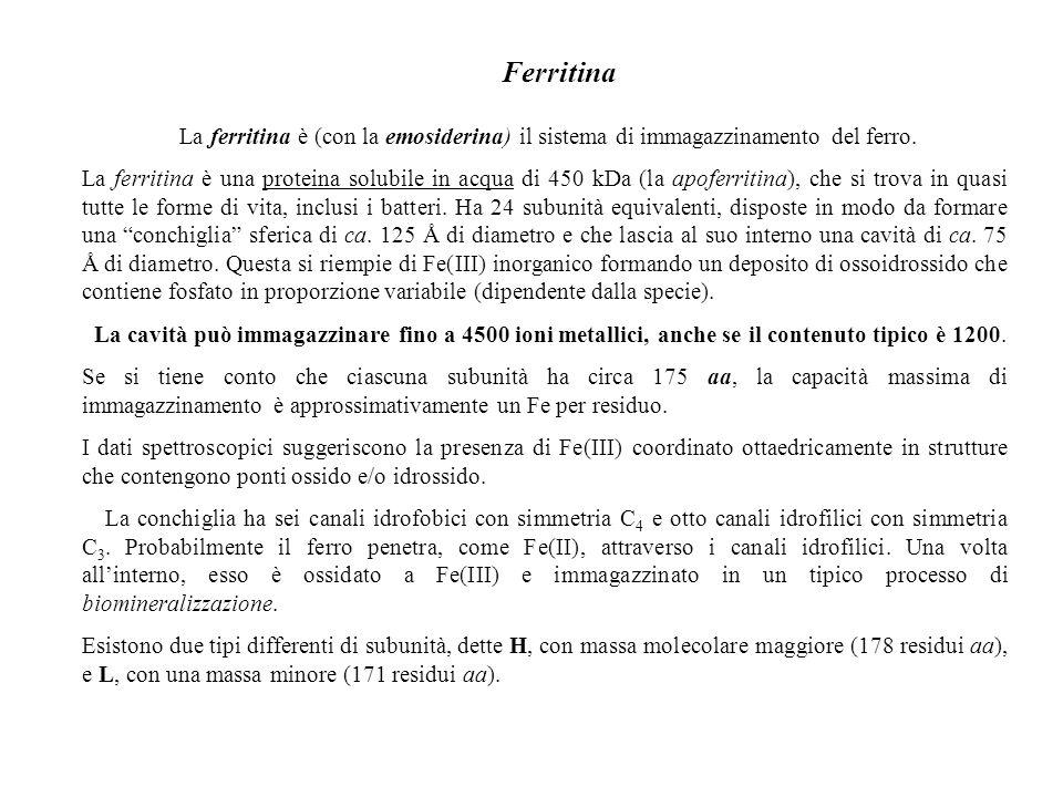 Ferritina La ferritina è (con la emosiderina) il sistema di immagazzinamento del ferro. La ferritina è una proteina solubile in acqua di 450 kDa (la a