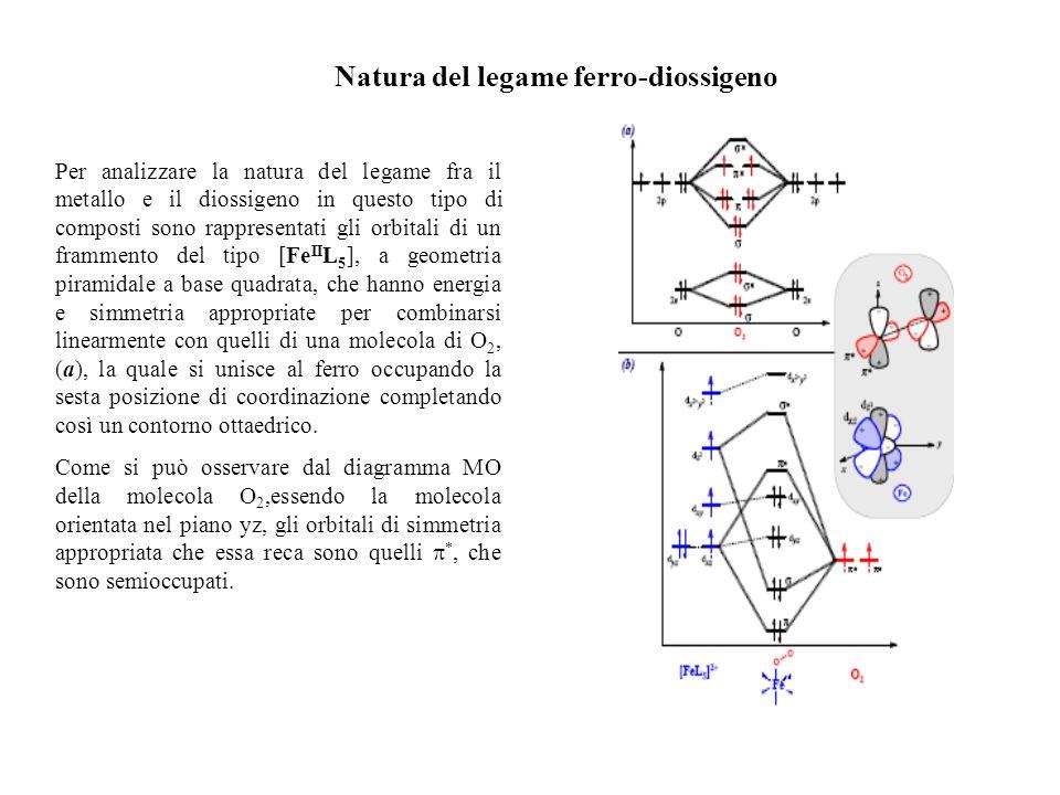 Natura del legame ferro-diossigeno Per analizzare la natura del legame fra il metallo e il diossigeno in questo tipo di composti sono rappresentati gl