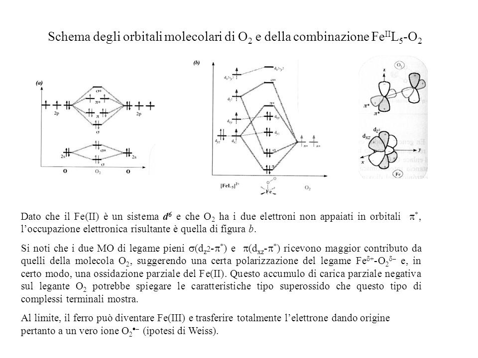 Schema degli orbitali molecolari di O 2 e della combinazione Fe II L 5 -O 2 Dato che il Fe(II) è un sistema d 6 e che O 2 ha i due elettroni non appai