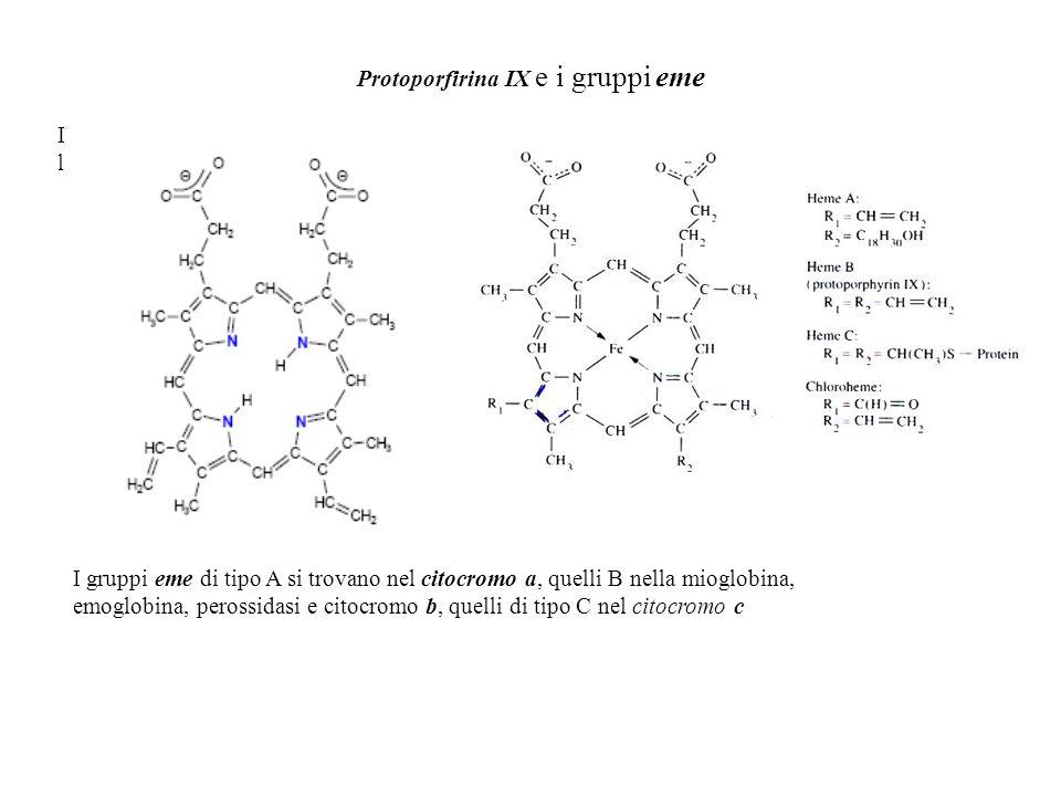 Protoporfirina IX e i gruppi eme IlIl I gruppi eme di tipo A si trovano nel citocromo a, quelli B nella mioglobina, emoglobina, perossidasi e citocrom
