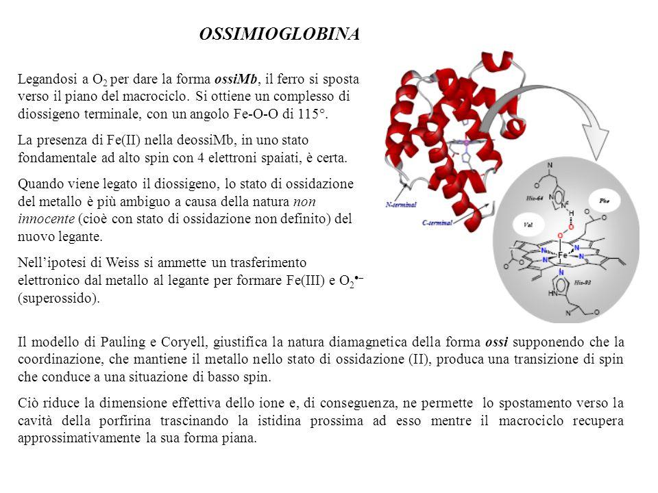 OSSIMIOGLOBINA Legandosi a O 2 per dare la forma ossiMb, il ferro si sposta verso il piano del macrociclo. Si ottiene un complesso di diossigeno termi