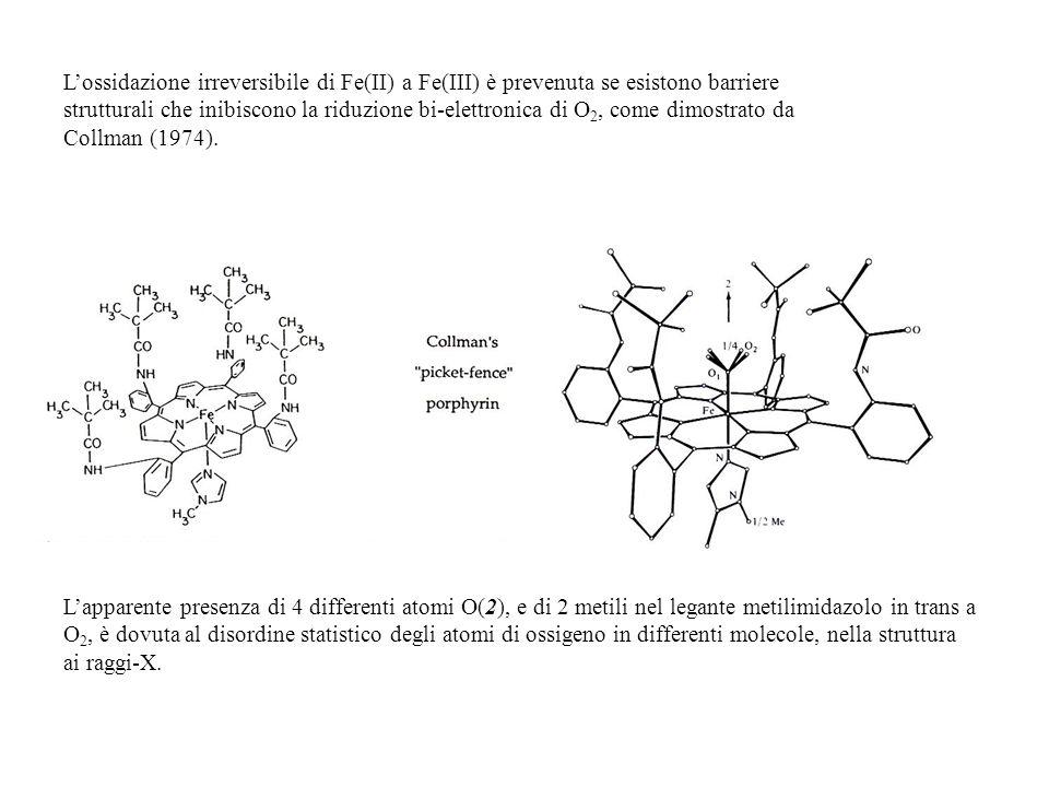 Lossidazione irreversibile di Fe(II) a Fe(III) è prevenuta se esistono barriere strutturali che inibiscono la riduzione bi-elettronica di O 2, come di