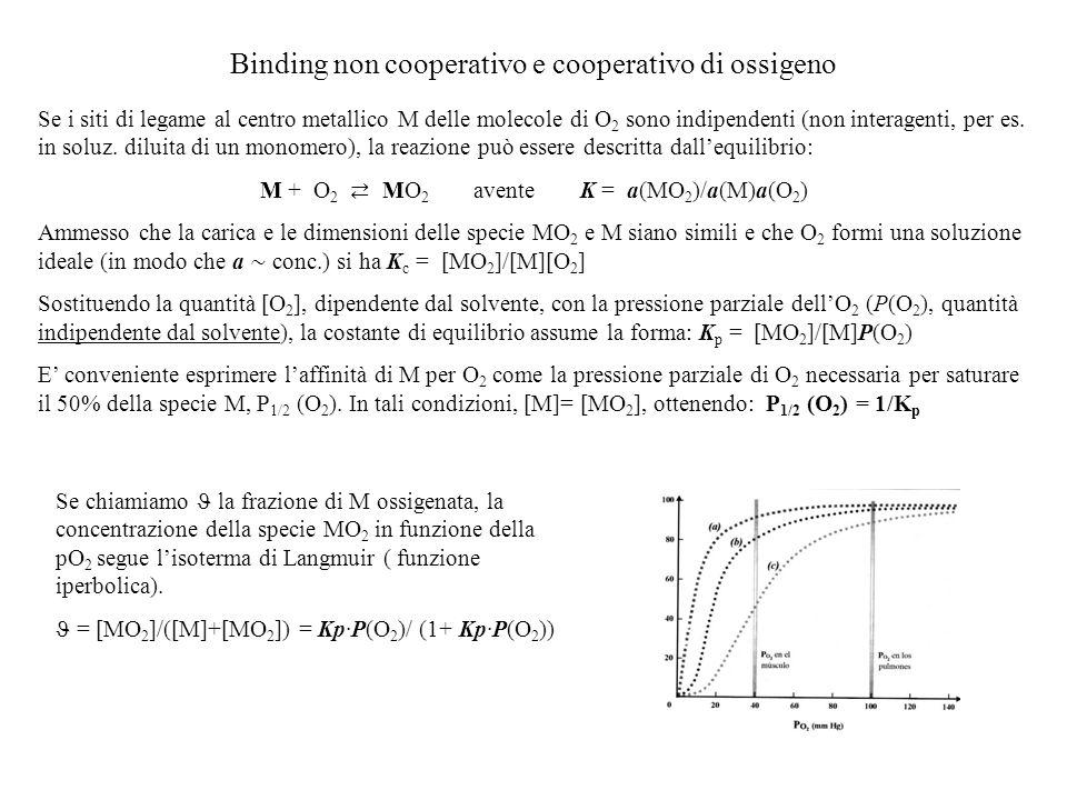 Binding non cooperativo e cooperativo di ossigeno Se i siti di legame al centro metallico M delle molecole di O 2 sono indipendenti (non interagenti,