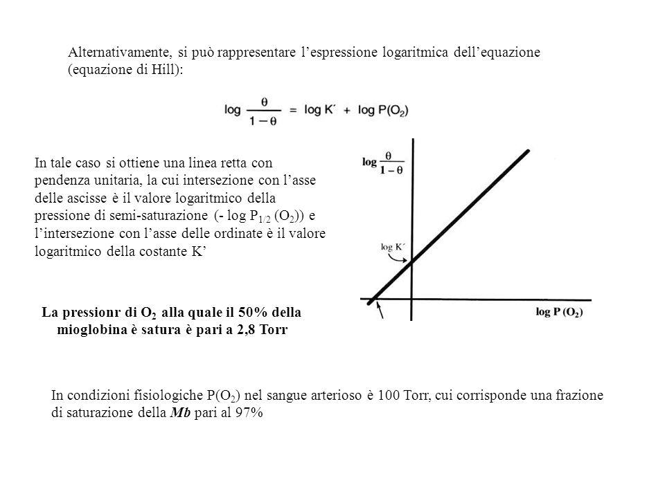 Alternativamente, si può rappresentare lespressione logaritmica dellequazione (equazione di Hill): In tale caso si ottiene una linea retta con pendenz