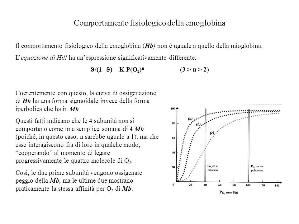 Comportamento fisiologico della emoglobina Il comportamento fisiologico della emoglobina (Hb) non è uguale a quello della mioglobina. Lequazione di Hi