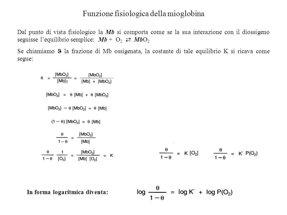 Funzione fisiologica della mioglobina Dal punto di vista fisiologico la Mb si comporta come se la sua interazione con il diossigeno seguisse lequilibr