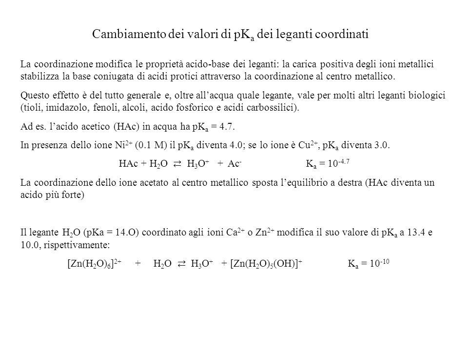 Cambiamento dei valori di pK a dei leganti coordinati La coordinazione modifica le proprietà acido-base dei leganti: la carica positiva degli ioni met