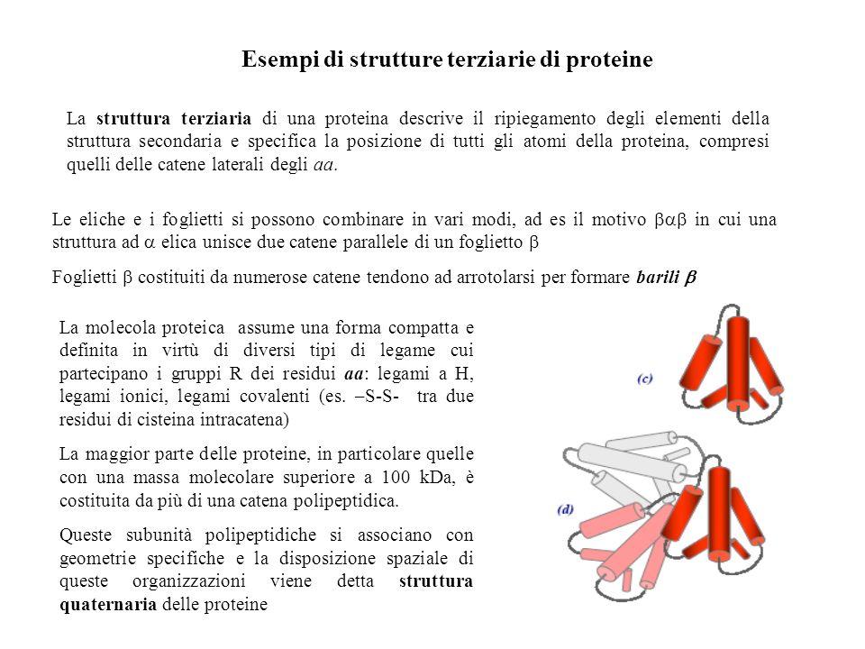 Esempi di strutture terziarie di proteine La struttura terziaria di una proteina descrive il ripiegamento degli elementi della struttura secondaria e