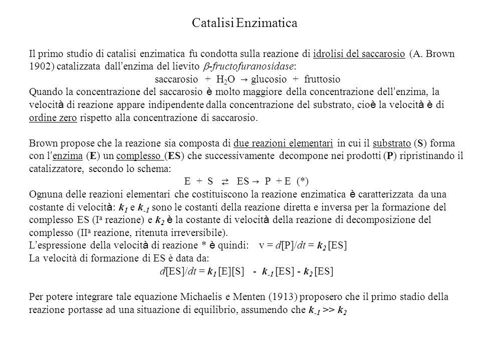 Catalisi Enzimatica Il primo studio di catalisi enzimatica fu condotta sulla reazione di idrolisi del saccarosio (A. Brown 1902) catalizzata dall enzi