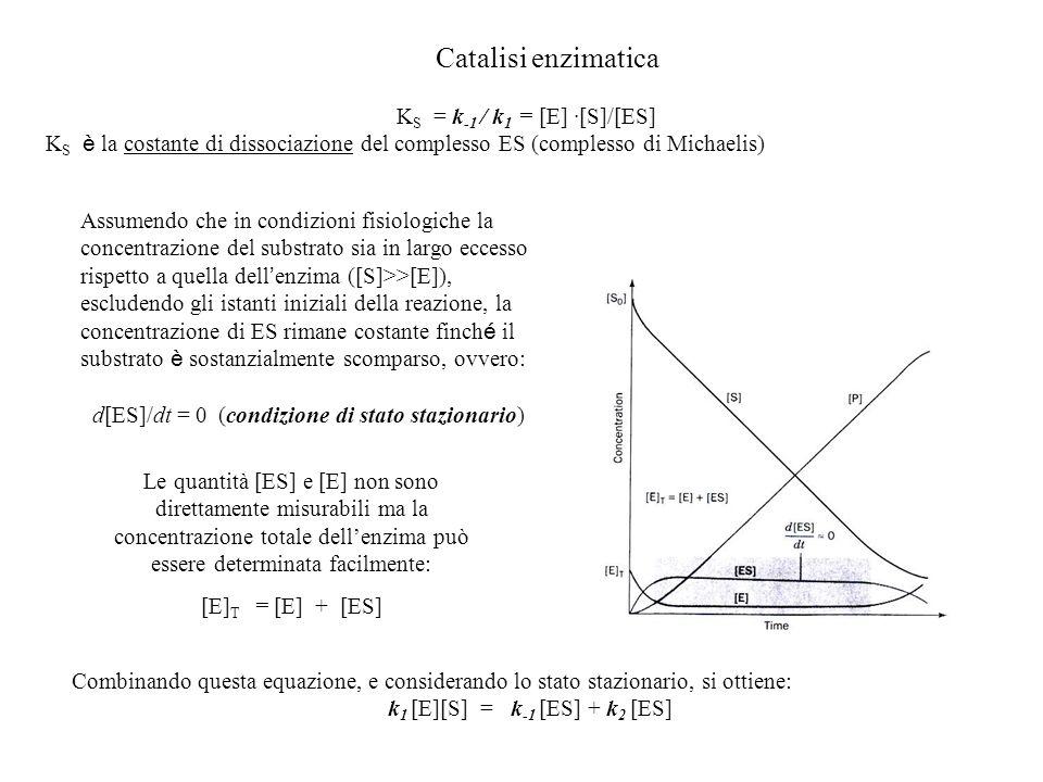 Catalisi enzimatica K S = k -1 / k 1 = [E] ·[S]/[ES] K S è la costante di dissociazione del complesso ES (complesso di Michaelis) Assumendo che in con
