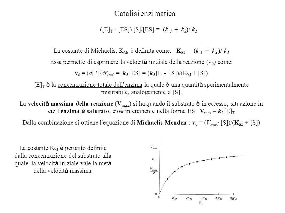 Catalisi enzimatica La costante di Michaelis, K M, è definita come: K M = (k -1 + k 2 )/ k 1 Essa permette di esprimere la velocit à iniziale della re