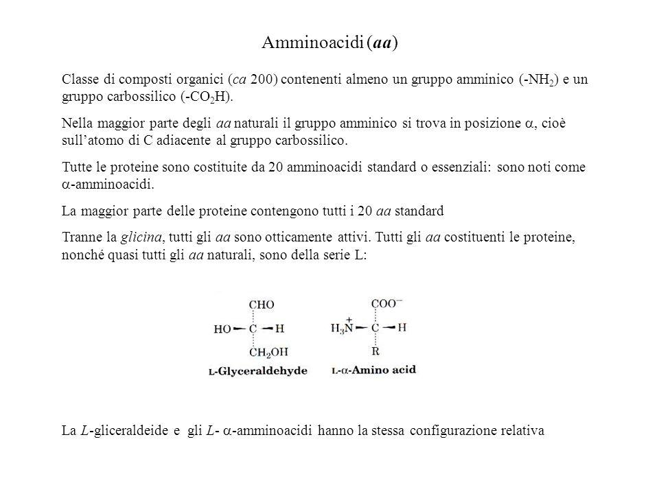 Amminoacidi (aa) Classe di composti organici (ca 200) contenenti almeno un gruppo amminico (-NH 2 ) e un gruppo carbossilico (-CO 2 H). Nella maggior