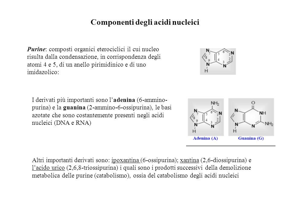 Componenti degli acidi nucleici Purine: composti organici eterociclici il cui nucleo risulta dalla condensazione, in corrispondenza degli atomi 4 e 5,
