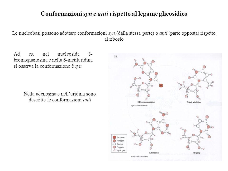 Conformazioni syn e anti rispetto al legame glicosidico Le nucleobasi possono adottare conformazioni syn (dalla stessa parte) o anti (parte opposta) r