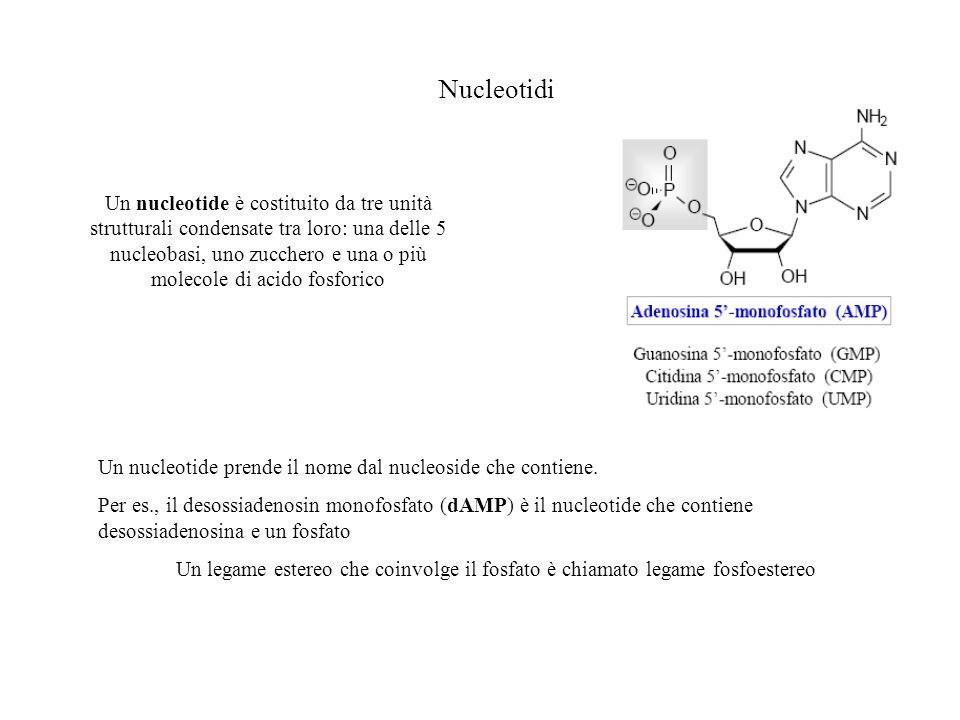 Nucleotidi Un nucleotide è costituito da tre unità strutturali condensate tra loro: una delle 5 nucleobasi, uno zucchero e una o più molecole di acido