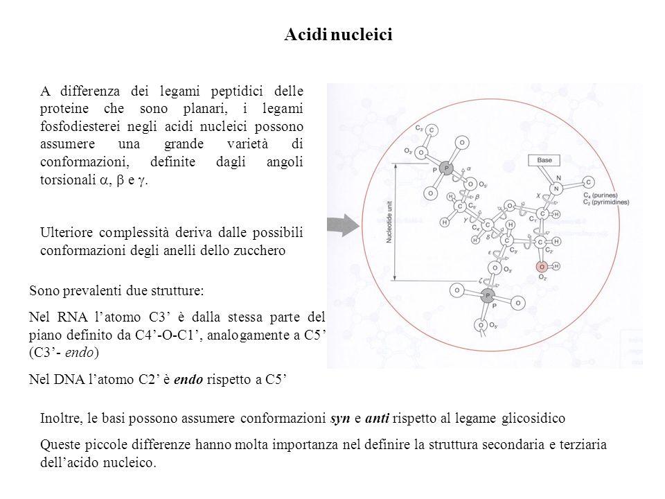 Acidi nucleici A differenza dei legami peptidici delle proteine che sono planari, i legami fosfodiesterei negli acidi nucleici possono assumere una gr