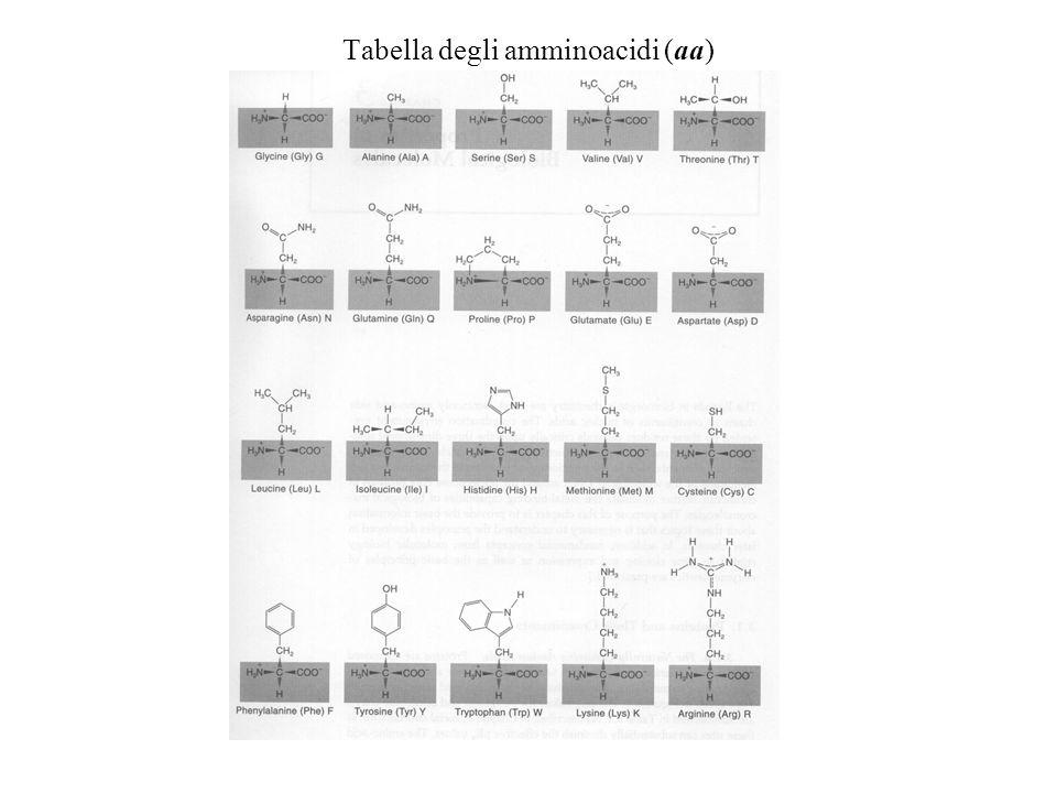 Struttura del DNA Le strutture del DNA sono meno complesse di quelle di RNA