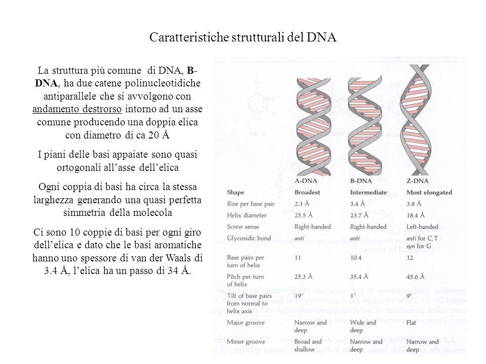 Caratteristiche strutturali del DNA La struttura più comune di DNA, B- DNA, ha due catene polinucleotidiche antiparallele che si avvolgono con andamen