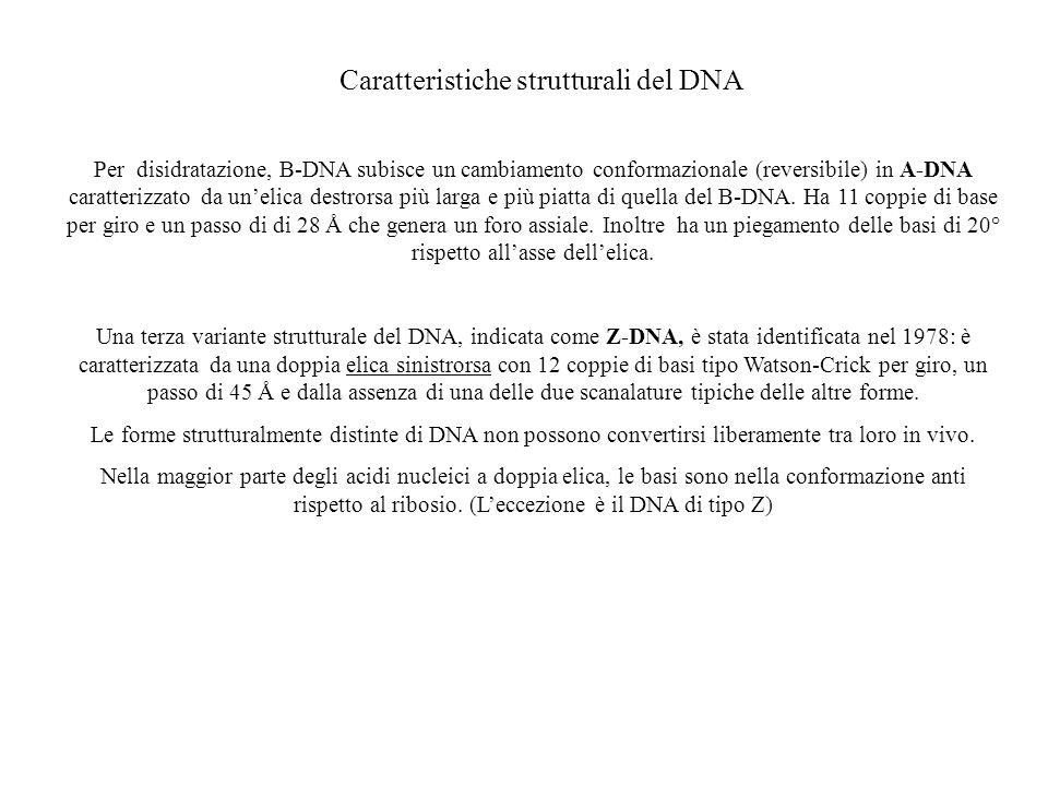 Caratteristiche strutturali del DNA Per disidratazione, B-DNA subisce un cambiamento conformazionale (reversibile) in A-DNA caratterizzato da unelica