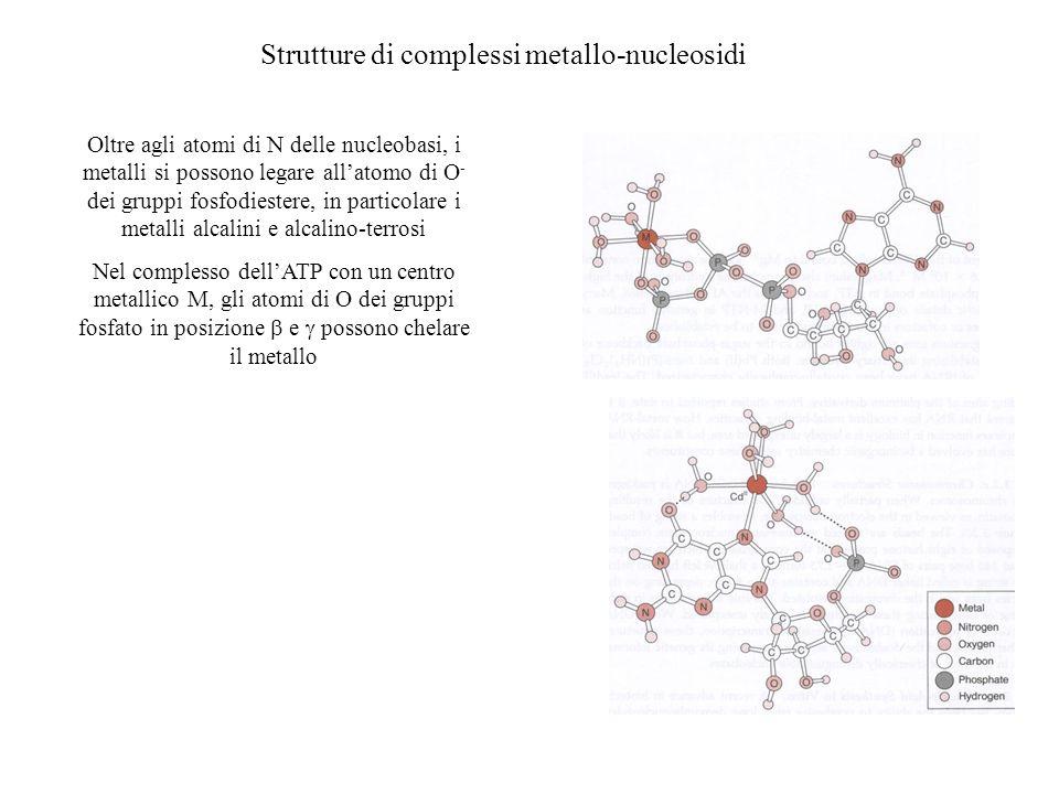 Strutture di complessi metallo-nucleosidi Oltre agli atomi di N delle nucleobasi, i metalli si possono legare allatomo di O - dei gruppi fosfodiestere