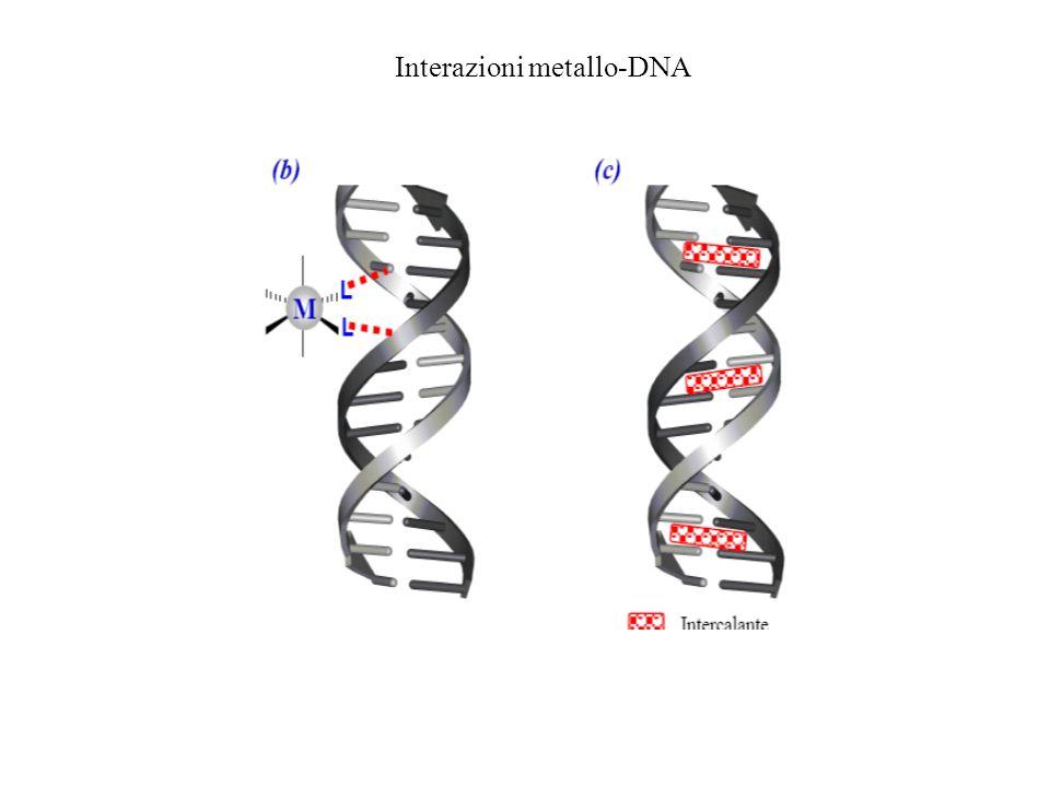 Interazioni metallo-DNA