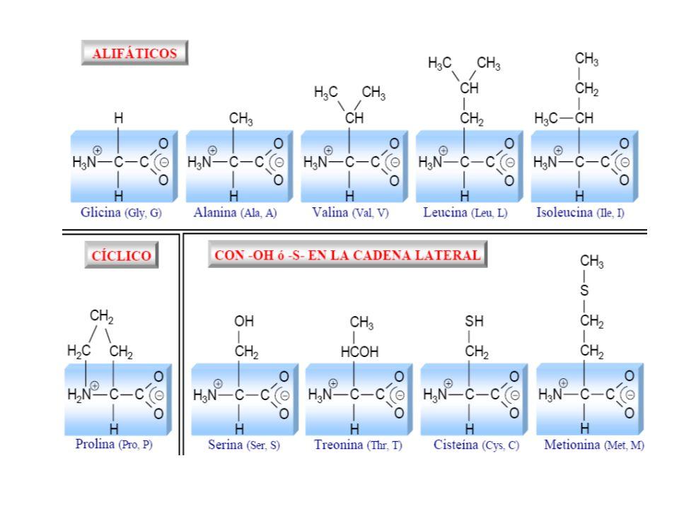 Nucleotidi Un nucleotide è costituito da tre unità strutturali condensate tra loro: una delle 5 nucleobasi, uno zucchero e una o più molecole di acido fosforico Un nucleotide prende il nome dal nucleoside che contiene.