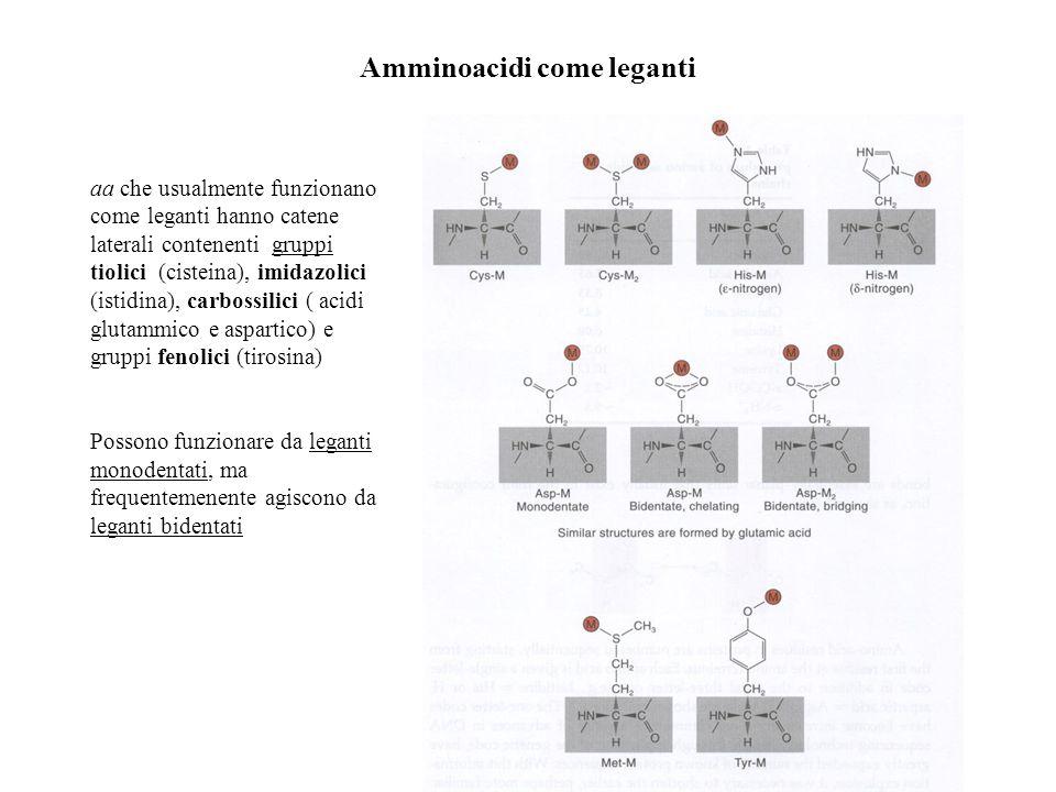 Amminoacidi come leganti aa che usualmente funzionano come leganti hanno catene laterali contenenti gruppi tiolici (cisteina), imidazolici (istidina),