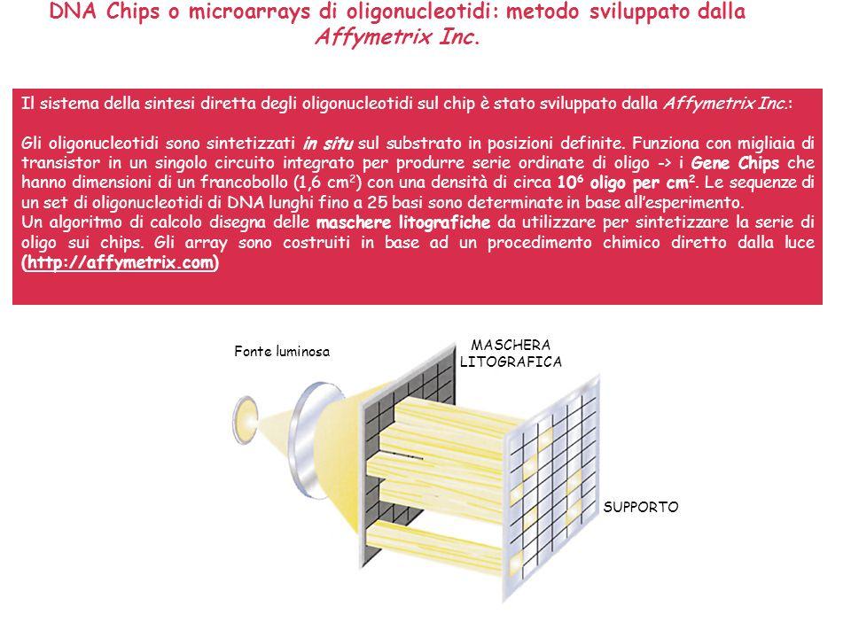 Metodo della Affymetrix Fonte luminosa MASCHERA LITOGRAFICA SUPPORTO Luce -> DEPROTEZIONE MASCHERA LITOGRAFICA SUBSTRATO Accoppiamento chimico T- Nuovo gruppo di protezione fotolabile Luce -> DEPROTEZIONE MASCHERA LITOGRAFICA SUBSTRATO C- Il procedimento è ripetuto