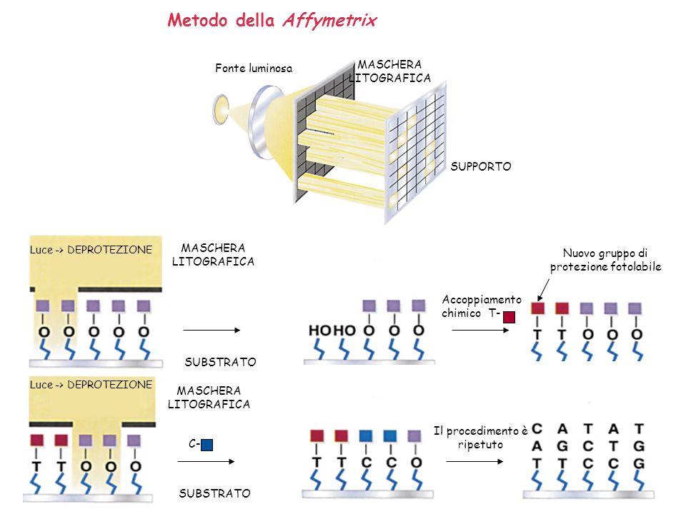 Metodo della Affymetrix Fonte luminosa MASCHERA LITOGRAFICA SUPPORTO Luce -> DEPROTEZIONE MASCHERA LITOGRAFICA SUBSTRATO Accoppiamento chimico T- Nuov