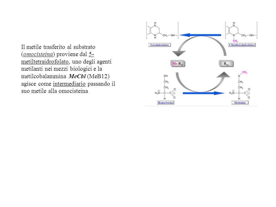 Il metile trasferito al substrato (omocisteina) proviene dal 5- metiltetraidrofolato, uno degli agenti metilanti nei mezzi biologici e la metilcobalam