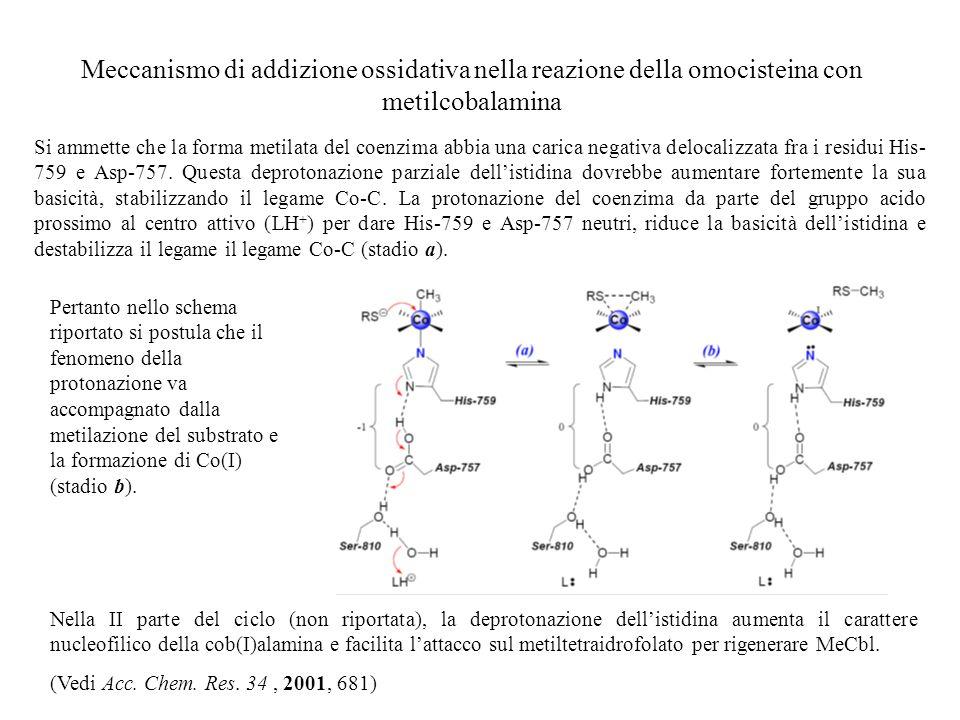Meccanismo di addizione ossidativa nella reazione della omocisteina con metilcobalamina Si ammette che la forma metilata del coenzima abbia una carica