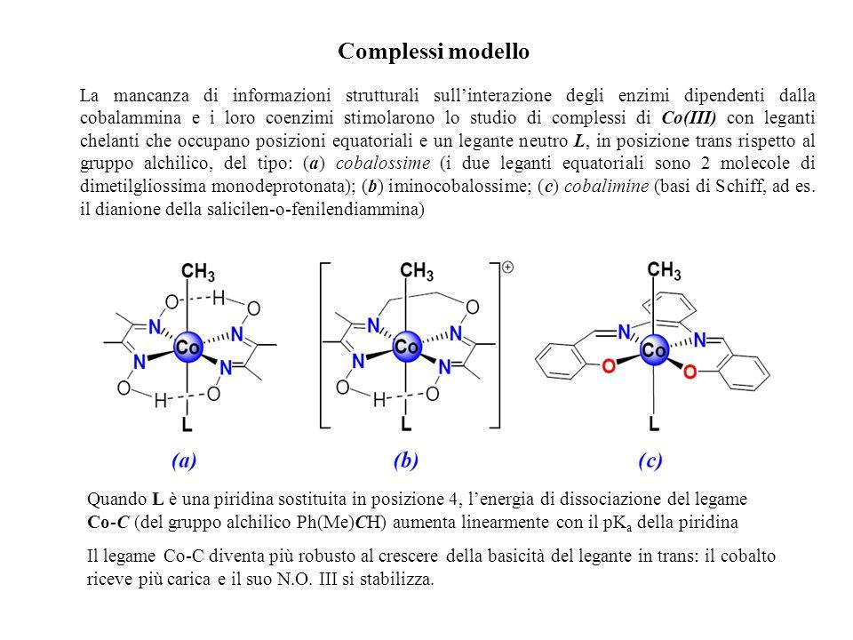 Complessi modello La mancanza di informazioni strutturali sullinterazione degli enzimi dipendenti dalla cobalammina e i loro coenzimi stimolarono lo s