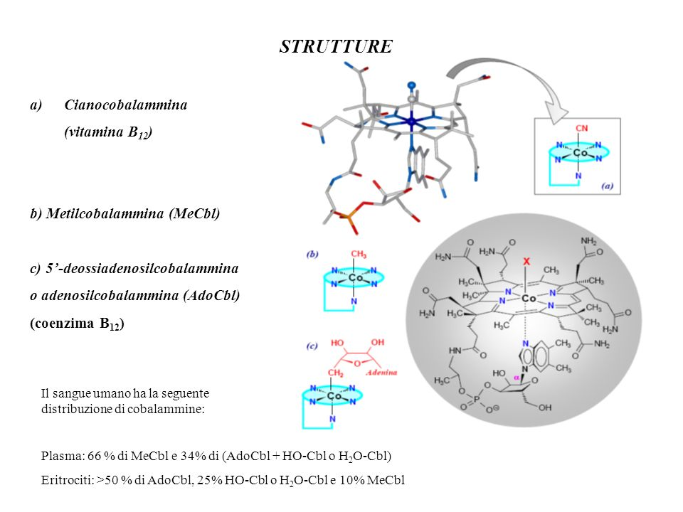 STRUTTURE a)Cianocobalammina (vitamina B 12 ) b) Metilcobalammina (MeCbl) c) 5-deossiadenosilcobalammina o adenosilcobalammina (AdoCbl) (coenzima B 12