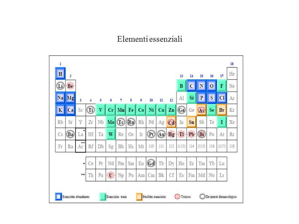 Elementi essenziali