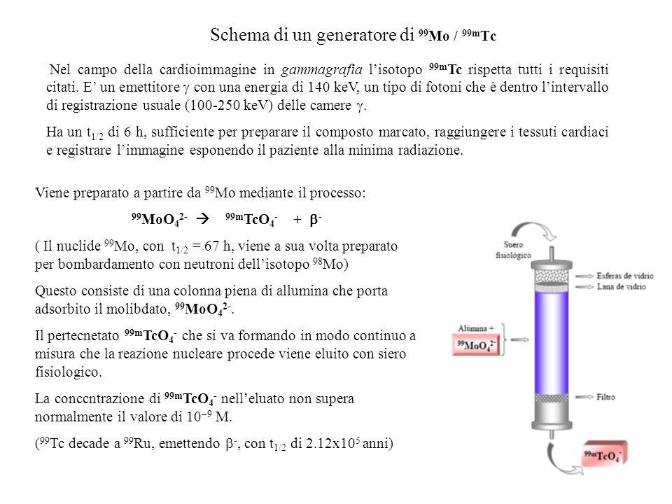 Schema di un generatore di 99 Mo / 99m Tc Nel campo della cardioimmagine in gammagrafia lisotopo 99m Tc rispetta tutti i requisiti citati. E un emetti