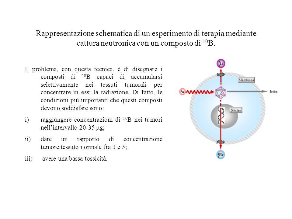 Rappresentazione schematica di un esperimento di terapia mediante cattura neutronica con un composto di 10 B. Il problema, con questa tecnica, è di di