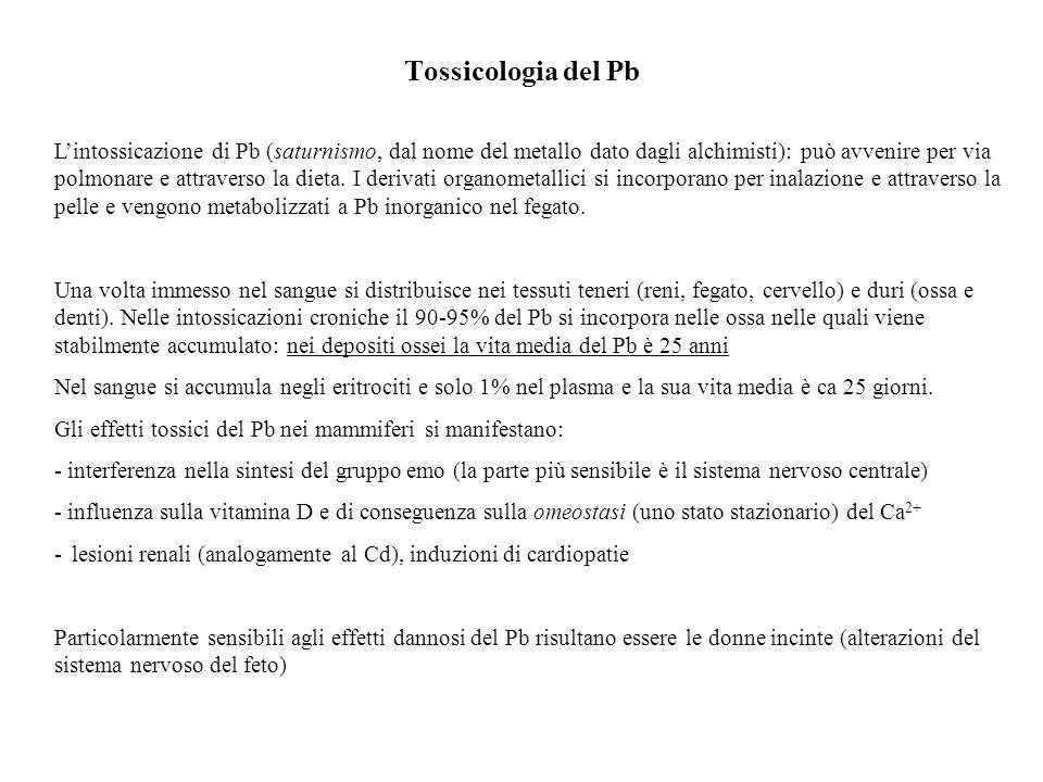 Tossicologia del Pb Lintossicazione di Pb (saturnismo, dal nome del metallo dato dagli alchimisti): può avvenire per via polmonare e attraverso la die